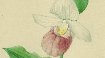 PAST EXHIBITION: Orchid Fever