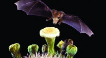PAST EXHIBITION: Bats: Creatures of the Night