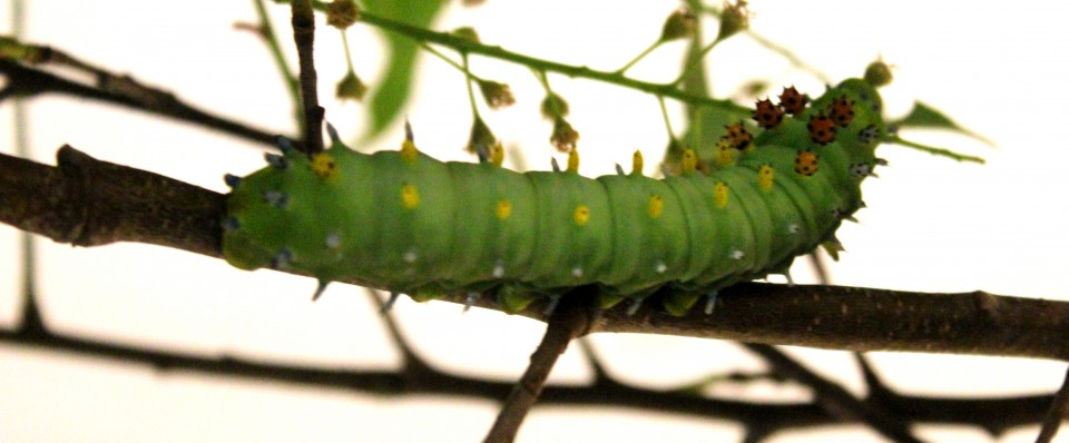 Caterpillar on branch