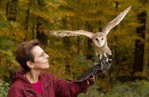 Animals Up Close: North American Birds of Prey