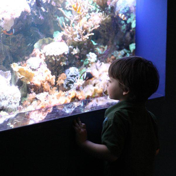 Aquarium-Boy