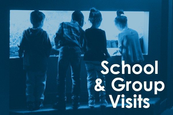 School and Group Visits