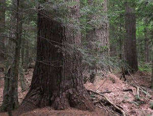 Special Screening: The Lost Forests of New England