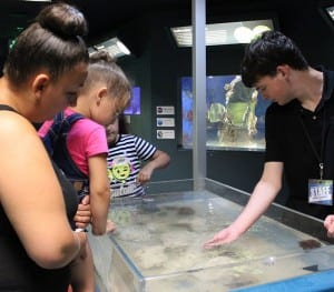 Discovery Tank Program @ Berkshire Museum